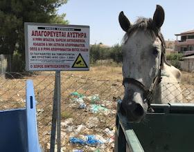 Πόρτο Χέλι: Βρήκε άλογο παραμελημένο μέσα στον καύσωνα με το πόδι του να έχει σφηνωθεί σε κουτί κονσέρβας