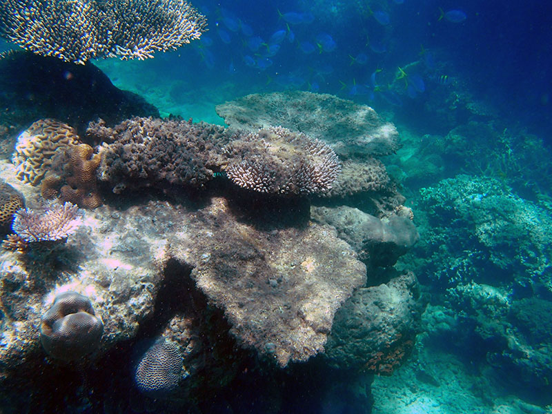 the great barrier reef off frankland islands far north queensland cairns