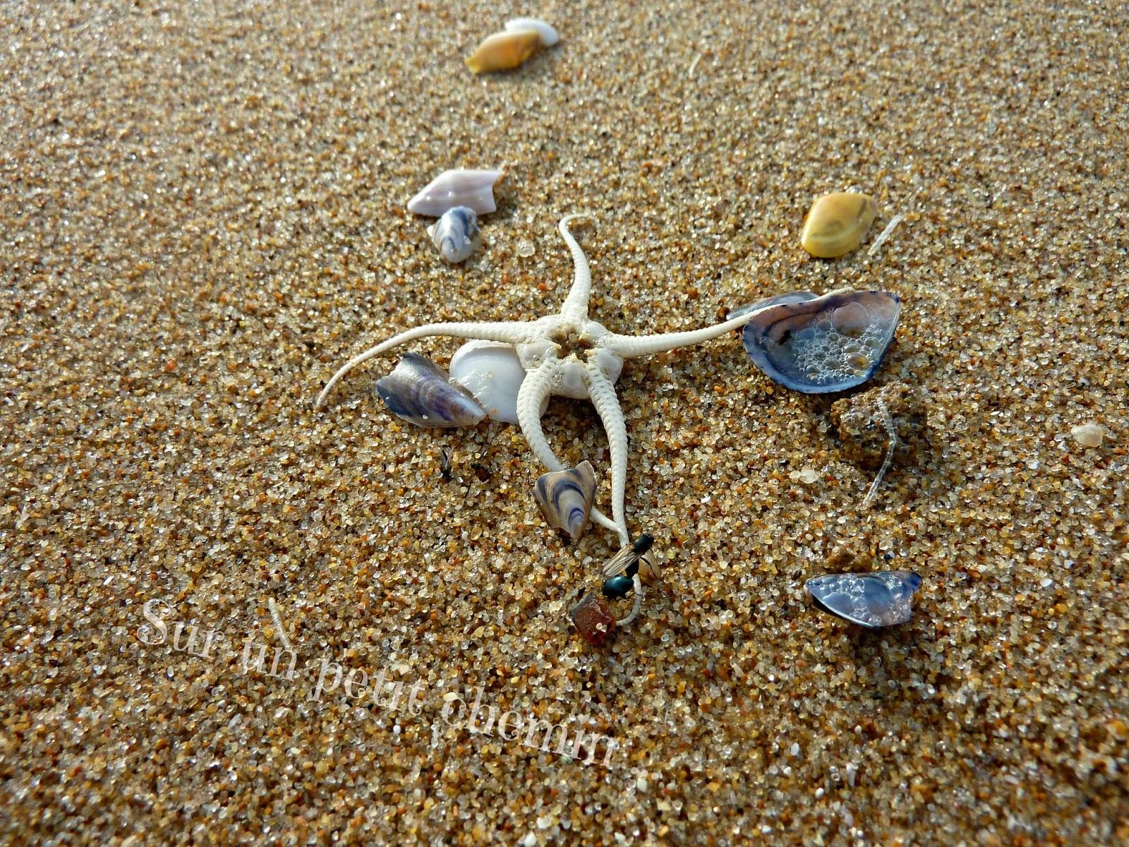 La mer, elle aussi a ses étoiles - Grande Plage de Saint Gilles Croix-de-Vie en Vendée