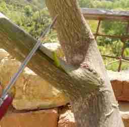 Ο εμβολιασμός των καρποφόρων δένδρων