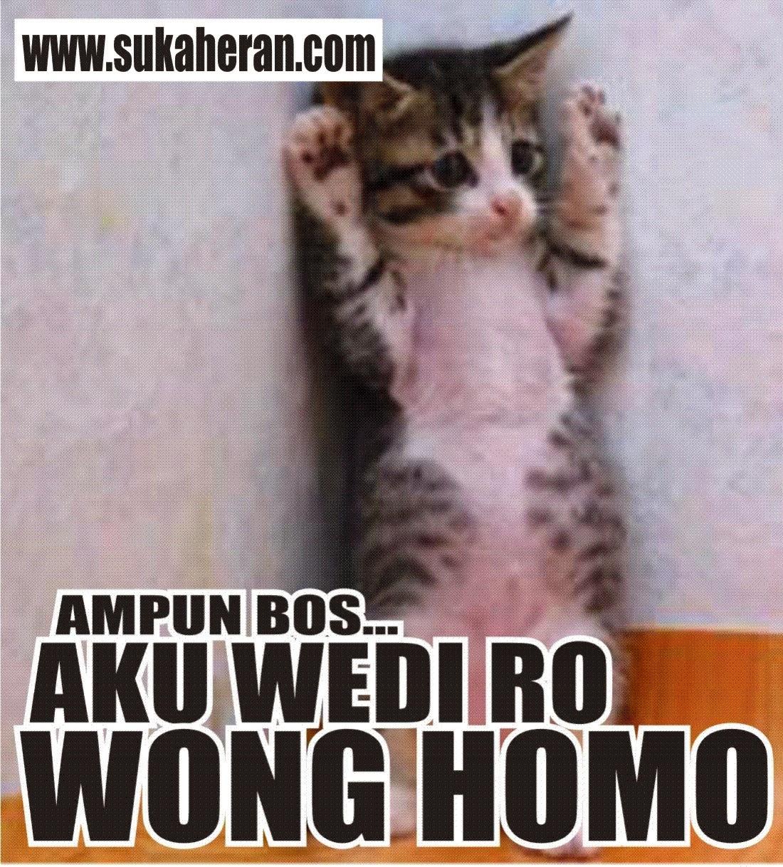 Rizky Akbar Maghribi Kumpulan Gambar Kucing Lucu