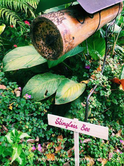 Stingless bees at Sonya's Garden