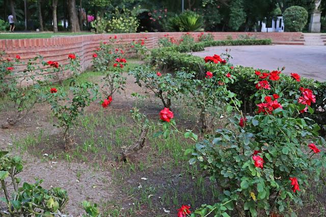 Rosales de la glorieta de Doña Sol