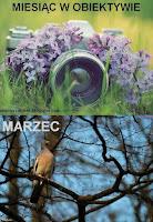 http://misiowyzakatek.blogspot.com/2016/03/miesiac-w-obiektywie-marzec.html
