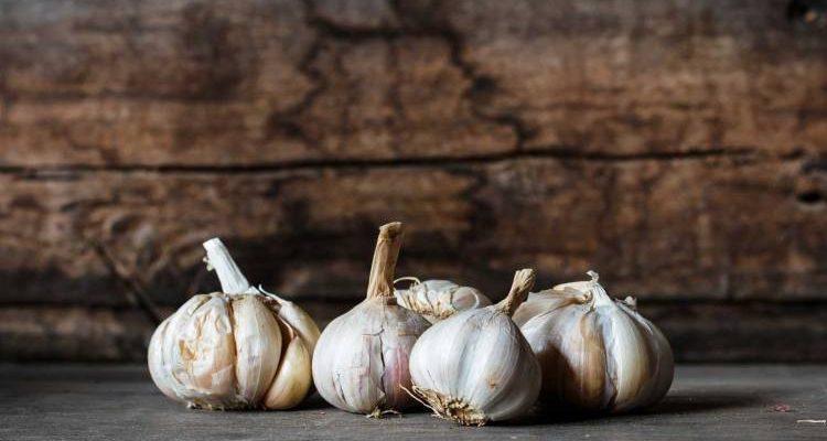 Σε ενθαρρυντικό κλίμα ξεκινάει η συλλογή του σκόρδου στον Πλατύκαμπο