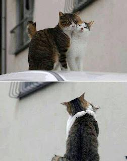 casal de gatos namorando