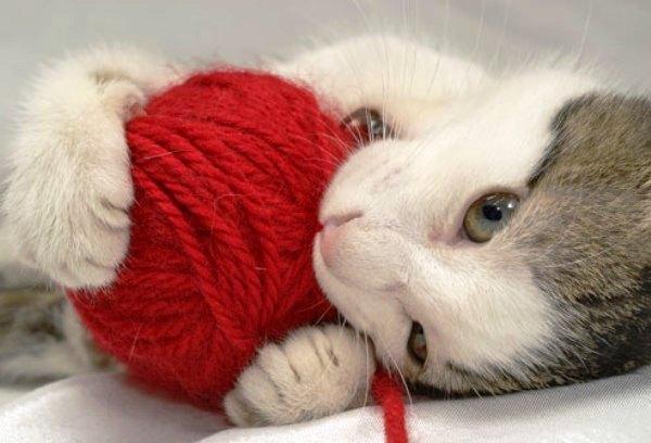 Cat  Evident Or Rd Med