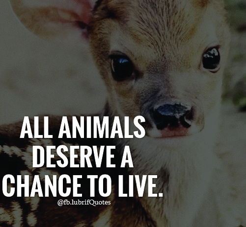 Animal Abuse Quotes By Famous People: Famous Animal Quotes And Sayings - Lubrifquotes