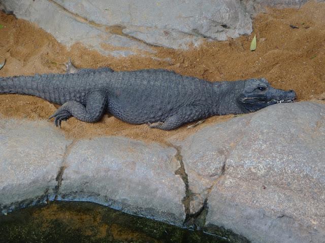 A Trip To The Zoo | Bioparc Fuengirola 3