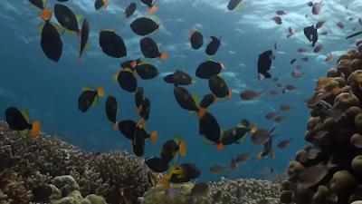 Lokasi Menyelam Wakatobi Dive Sites karang