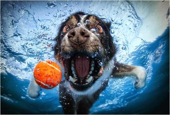slike pasa pod vodom