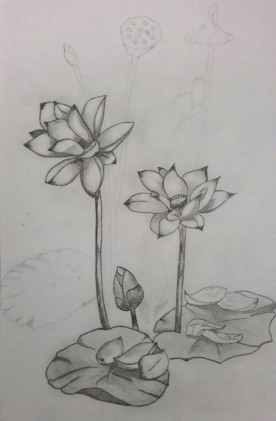 Gambar Bunga Teratai Hitam Putih Pickini