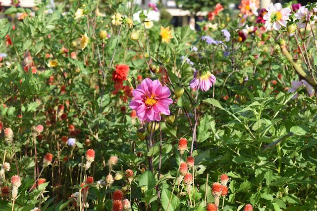 Resilience, flower, garden, cottage garden