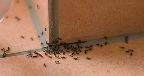 Learn What Causes The Ants To Generate Your Home Their Camp And Remove It.  The Rodents Are Going To Be Very Happy To Keep Out Of Your Kitchen.
