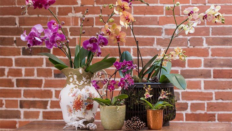Orquideas en jarrones