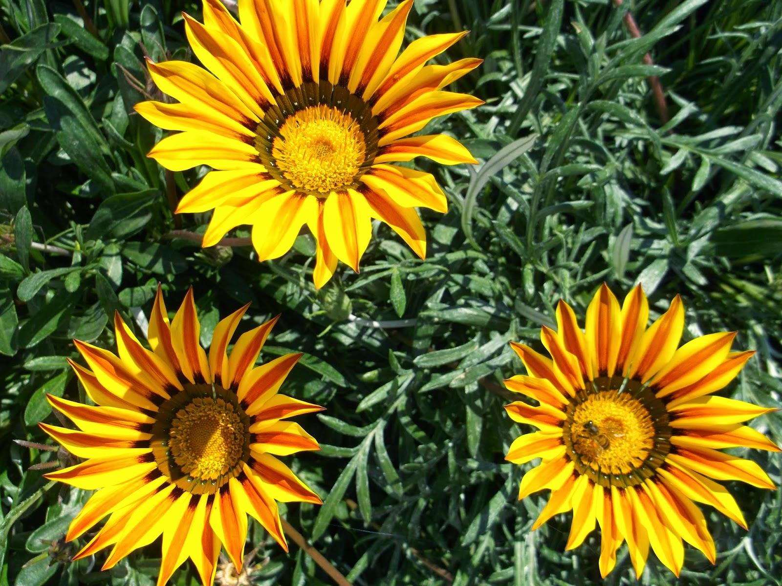 Показать цветок гацания фото