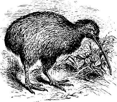 Burung kiwi berparuh panjang