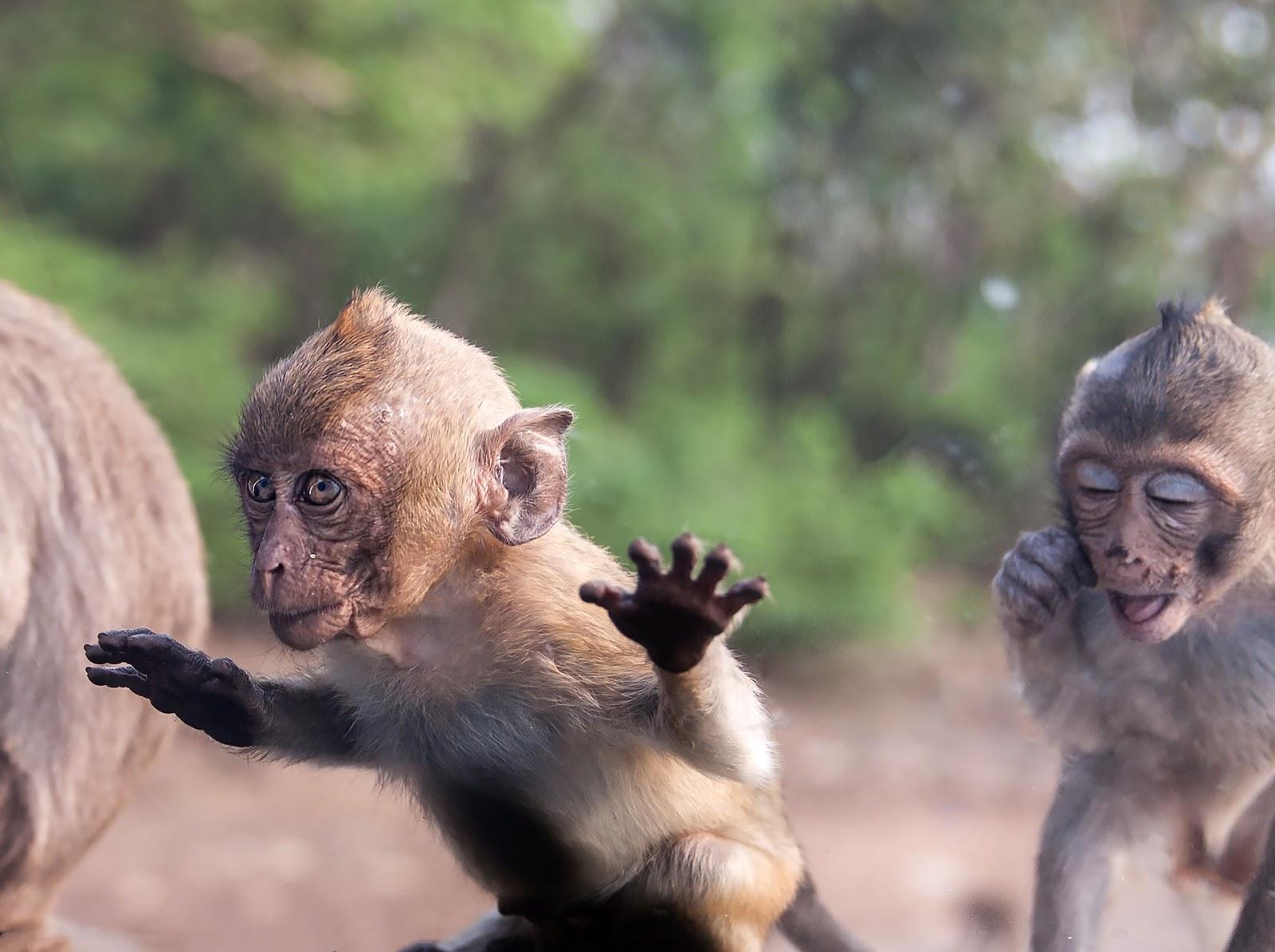 Tajlandia-W królestwie małp