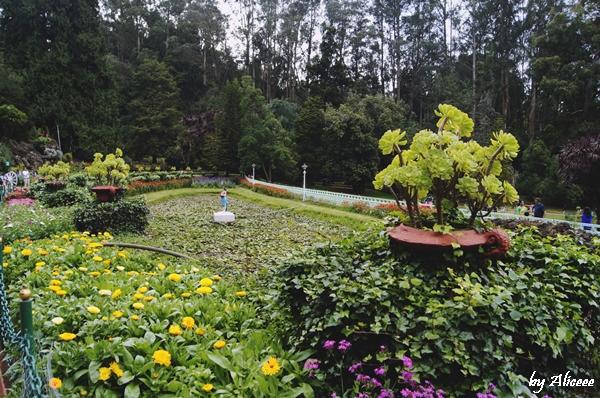 Ooty-Gradina-Botanica