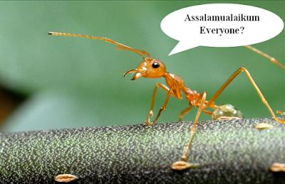 Keistimewaan Semut yang Belum Kita Ketahui