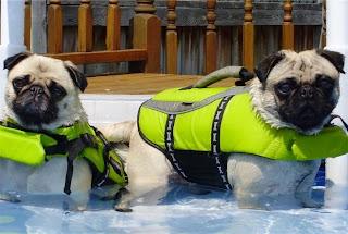 Life jacket pugs