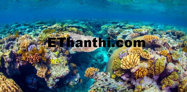 உலகின் மிகப்பெரிய உயிரினம் 'கிரேட் பேரியர்' மரணம்   The world's largest creature 'Great Barrier Reef' death !
