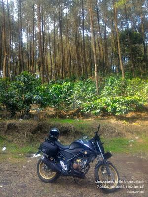 All New Honda CB150R dengan background hutan Pinus Jahim