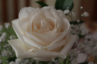 A Lovely White Rose, Living From Glory To Glory Blog...