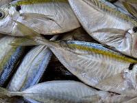 4 Cara Memilih Ikan Segar Agar Tidak Tertipu