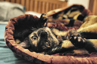 nymph - tortoiseshell cat
