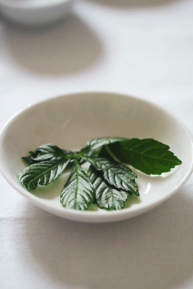 Blätter von Jiaogulan (Dschingis Khan) | im Blog für food, wine, travel & love von Arthurs Tochter kocht von Astrid Paul