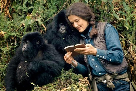 Schools : Dian Fossey, a great woman in the mist