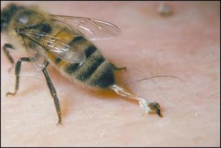 Γιατί πεθαίνουν οι μέλισσες αφού κεντρίσουν