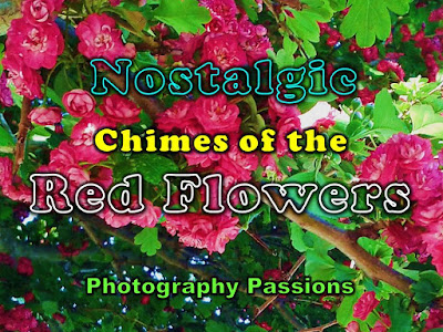 http://www.photographypassions.xyz/2016/01/chimes-of-red-flowers-closeup-flower.html