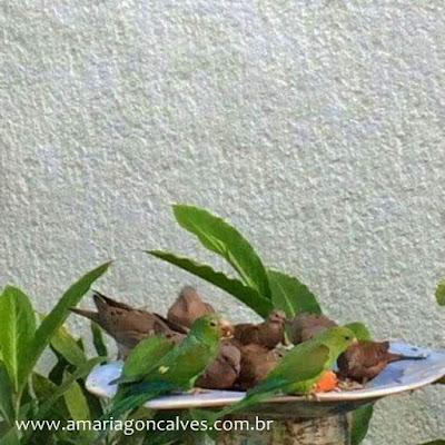 passarinhos-jardim