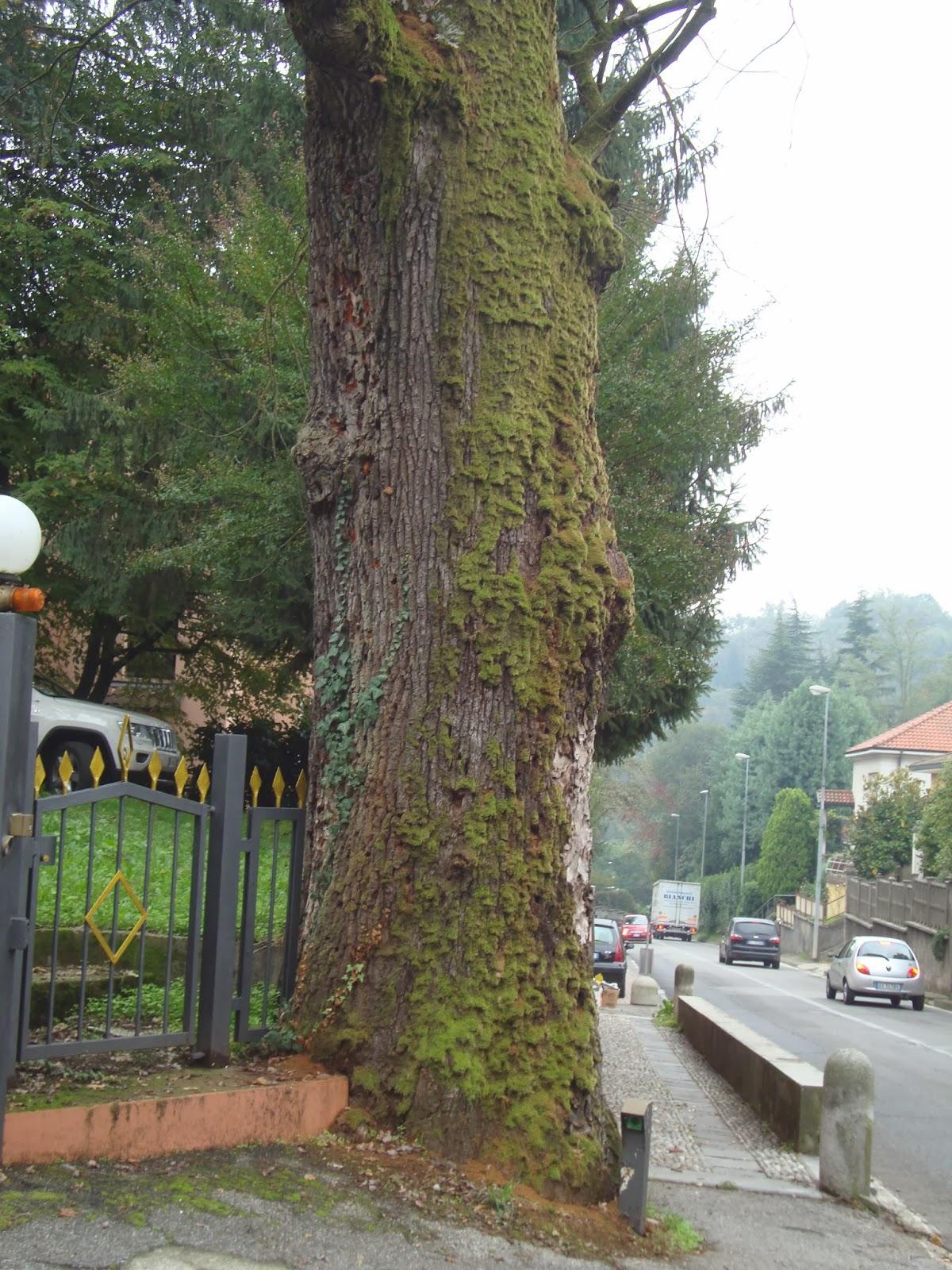Un piccolo giardino in citt la festa degli alberi for Albero per piccolo giardino