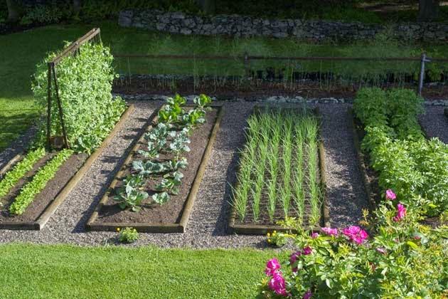 tanaman-organik