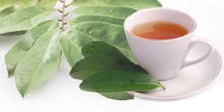 Khasiat daun sirsak sebagai bahan ramuan obat tradisional sudah tak dibimbangkan lagi Ramuan Obat batu ginjal Tradisional dari daun sirsak