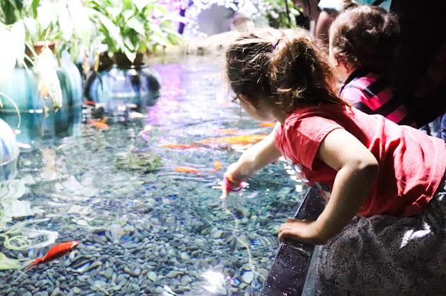 cineaqua-bassin-caliner-poisson-aquarium-paris