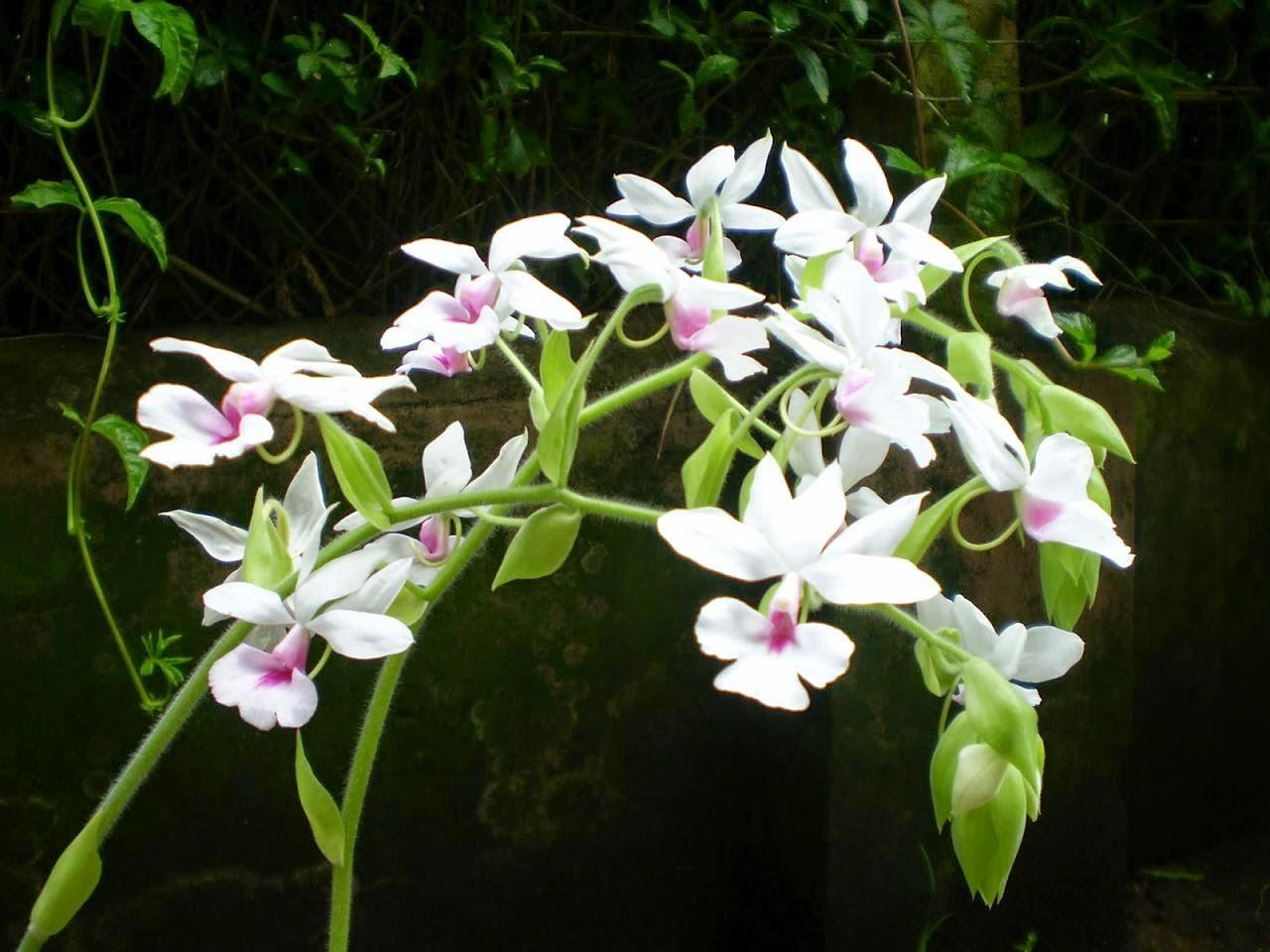 tải hình nền hoa phong lan đẹp nhất