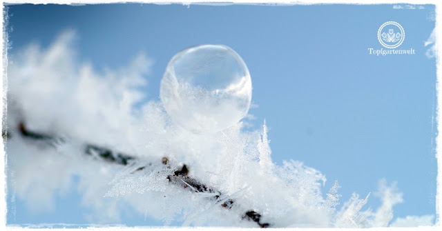 Gartenblog Topfgartenwelt: gefrorene Seifenblase und Raureif