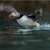 Έρευνα αποκαλύπτει ότι πάνω από ένα εκατομμύριο είδη απειλούνται με εξαφάνιση!