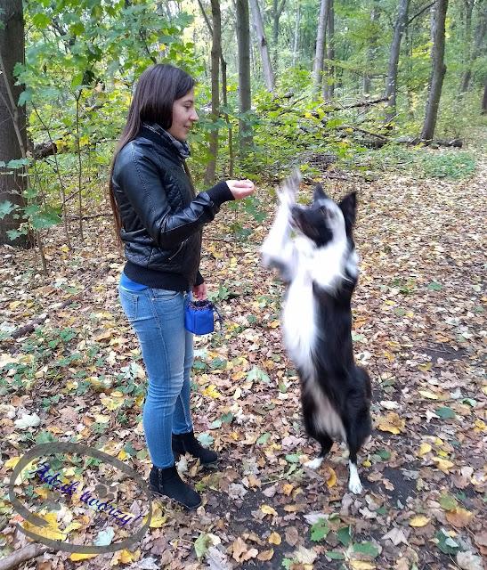 blog o szyciu diy, szycie dla zwierząt