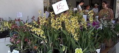 Feira de orquídeas em Araxá
