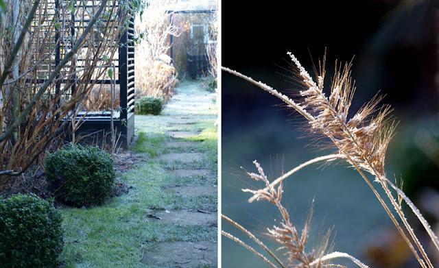Haven i januar med frost