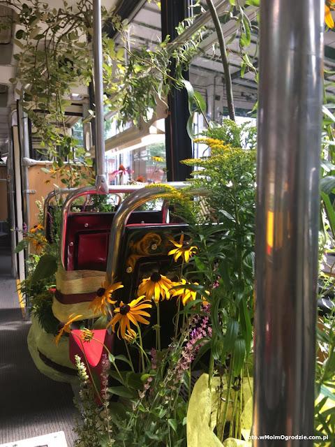 aranzacje roslinami w tramwaju