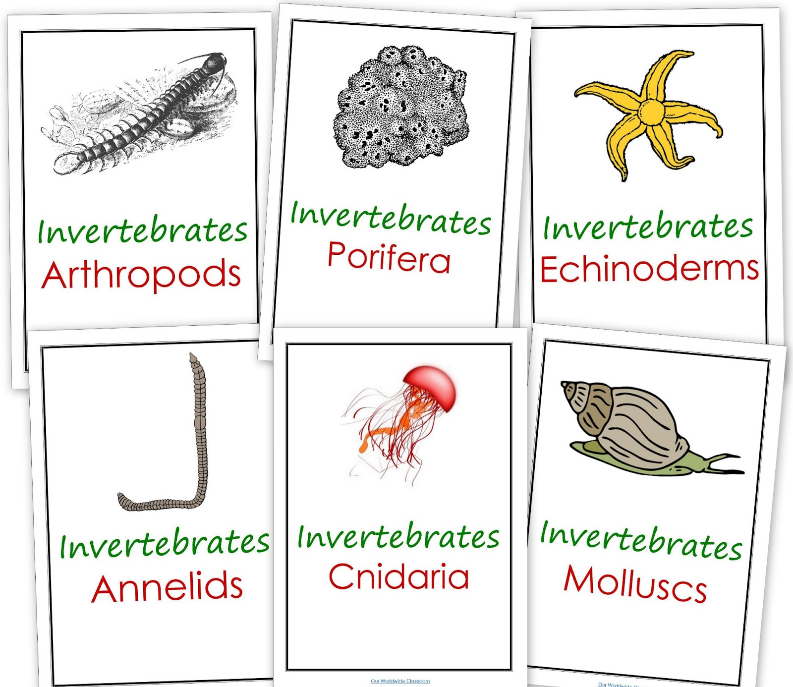 Our Worldwide Classroom Our Animal Kingdom Notebooks With