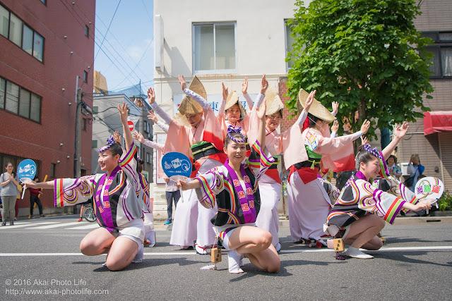 飛鳥連、マロニエ祭り、福井通りの演舞の写真 その2