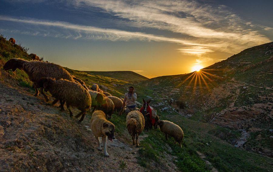 Двоє вівчарів в Одеській області побили третього, останній від побоїв помер