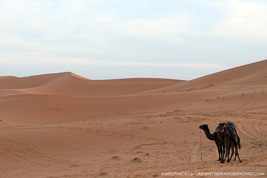 saharan safari morocco